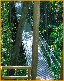 South Shore Zipline Walkways